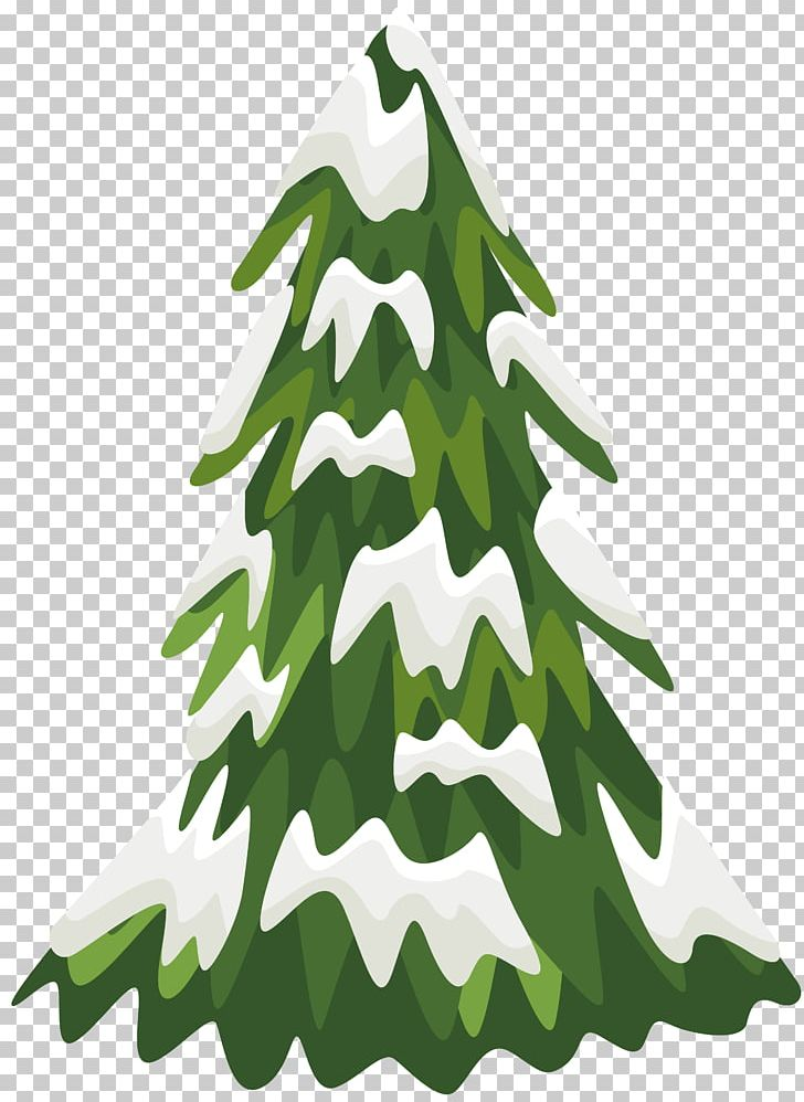 Snow tree. Eastern white pine png