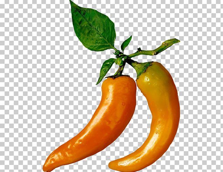 Serrano Pepper Chili Pepper Cayenne Pepper Paprika Vegetarian Cuisine PNG, Clipart, Cayenne Pepper, Chili Pepper, Food, Fruit, Leaf Free PNG Download