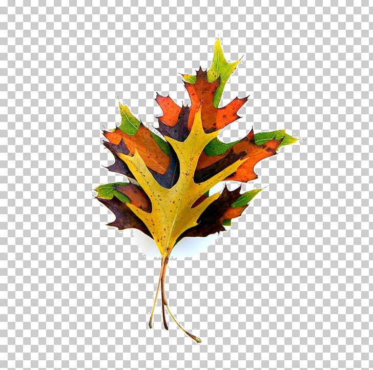 Maple Leaf Paper Autumn Leaf Color Plant Stem PNG, Clipart, Art, Autumn, Autumn Leaf Color, Collage, Color Free PNG Download
