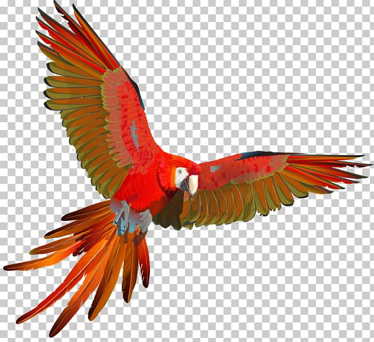 Scarlet Macaw Parrot Red-and-green Macaw Blue-and-yellow Macaw PNG, Clipart, Animals, Beak, Bird, Blue And Yellow Macaw, Blueandyellow Macaw Free PNG Download