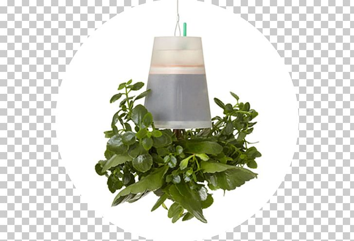 Flowerpot Herb PNG, Clipart, Flowerpot, Herb, Plant, Polygon City Flyer Free PNG Download