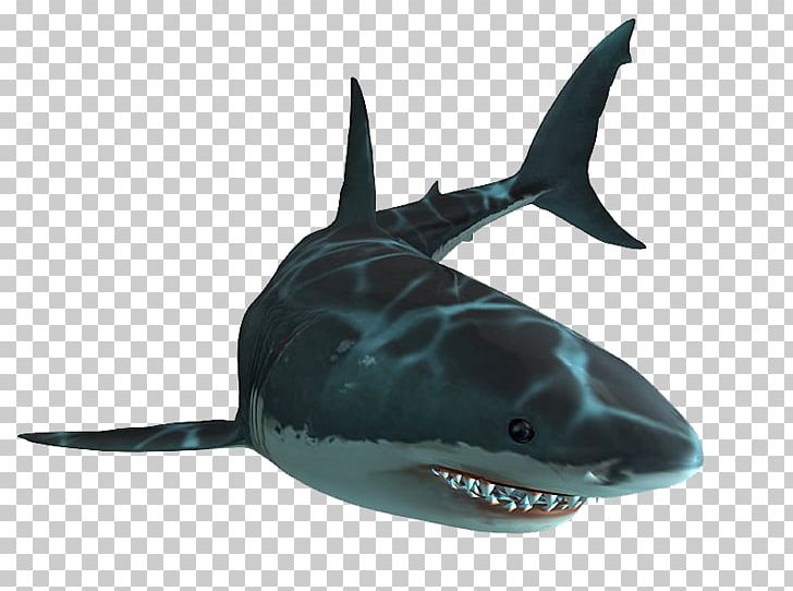 Jaws Unleashed Shark Jaws Playstation 2 Great White Shark Png Clipart Animals Cartilaginous Fish Fin Fish 7,053 transparent png illustrations and cipart matching shark. jaws unleashed shark jaws playstation 2
