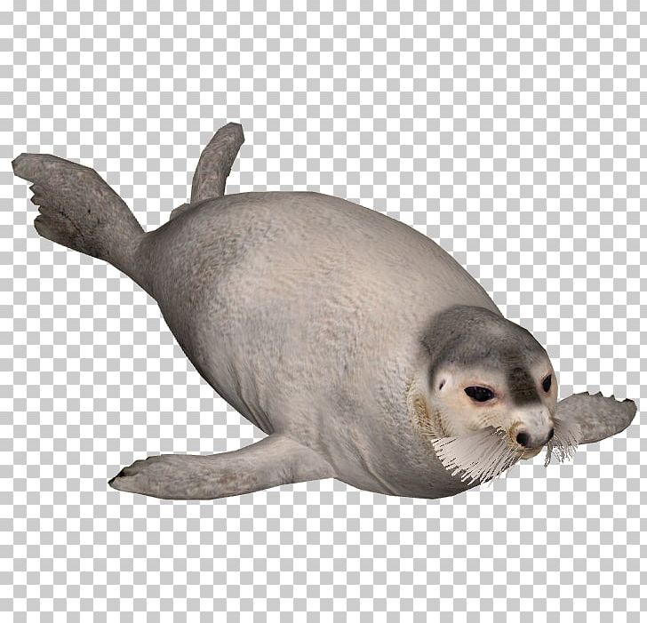 Harbor Seal Sea Lion Earless Seal Bearded Seal PNG, Clipart, Animal, Animal Figure, Animals, Arctic Animals, Beard Free PNG Download