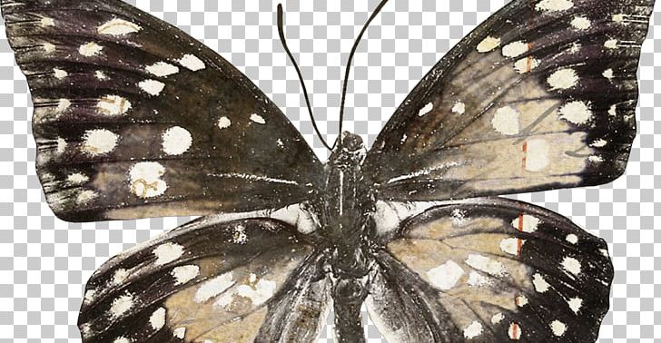 Monarch Butterfly Pieridae Brush-footed Butterflies Moth PNG, Clipart, Arthropod, Brush Footed Butterfly, Butterfly, Field Guide, Insect Free PNG Download