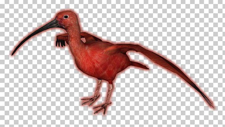 Zoo Tycoon 2 Beak Scarlet Ibis Bird PNG, Clipart, Animals