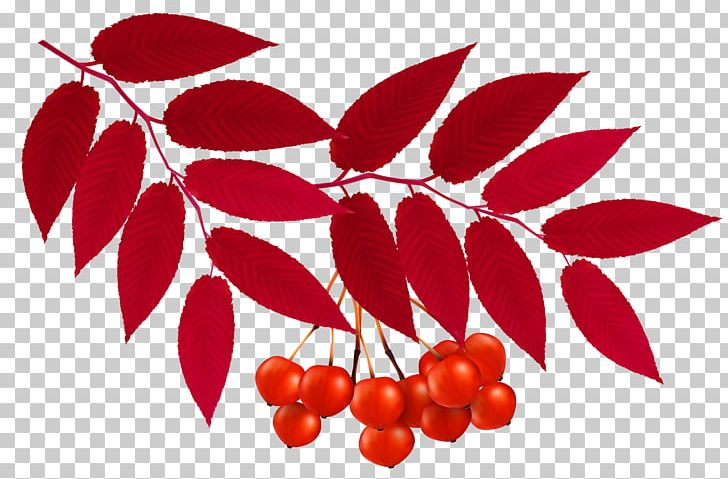 Autumn Leaf Color Red PNG, Clipart, Autumn, Autumn Leaf Color, Berry, Branch, Cherry Free PNG Download
