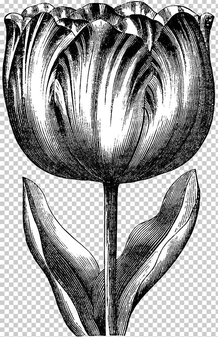 Tulip Graphics Drawing PNG, Clipart, Art, Black And White, Bulb, Computer Icons, Creative Daffodils Free PNG Download