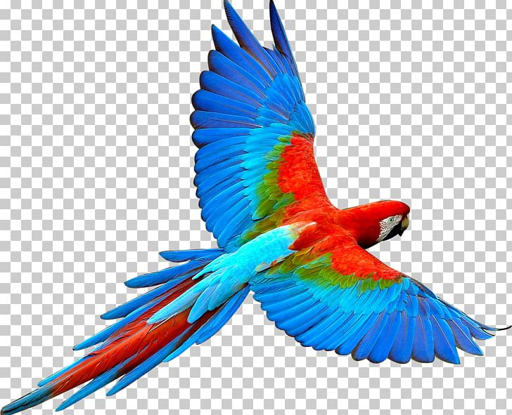 Parrot Bird Flight Scarlet Macaw PNG, Clipart, Animal, Animals, Bird, Birds, Color Free PNG Download