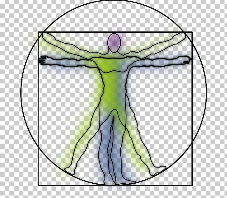 Vitruvian Man Drawing Human Body Anatomy Png Clipart Anatomy Area Arm Art Circle Free Png Download