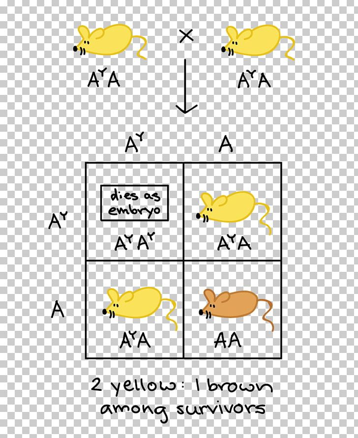 Lethal Allele Pleiotropy Punnett Square Dominancia Incompleta PNG, Clipart, Allele, Angle, Area, Beak, Bird Free PNG Download