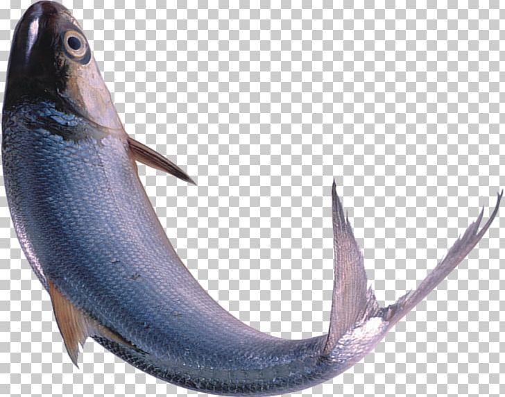 Swordfish Seafood PNG, Clipart, Animals, Aquarium Fish, Billfish, Bony Fish, Breath Free PNG Download