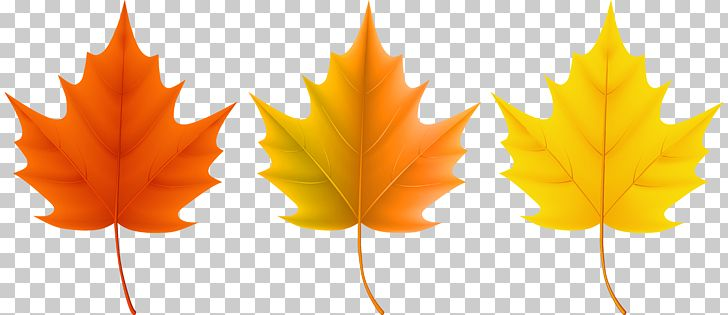 Red Maple Sugar Maple Autumn Leaf Color PNG, Clipart, Autumn, Autumn Leaf Color, Autumn Leaves, Clip Art, Clipart Free PNG Download