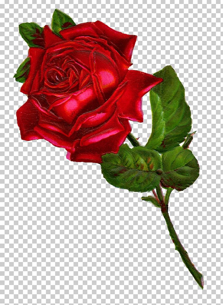 Rose Flower Red PNG, Clipart, Artificial Flower, Botanical Illustration, China Rose, Cut Flowers, Digital Image Free PNG Download