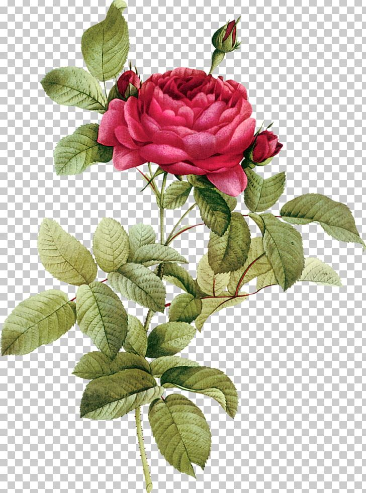 Flower Stock Photography Death Rose PNG, Clipart, Child, China Rose, Condolences, Cut Flowers, Death Free PNG Download