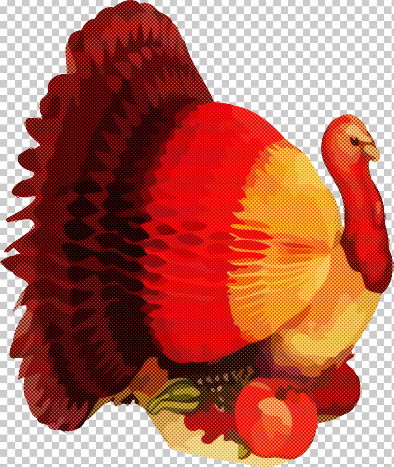 Thanksgiving Turkey PNG, Clipart, Bird, Red, Thanksgiving, Thanksgiving Turkey, Turkey Free PNG Download