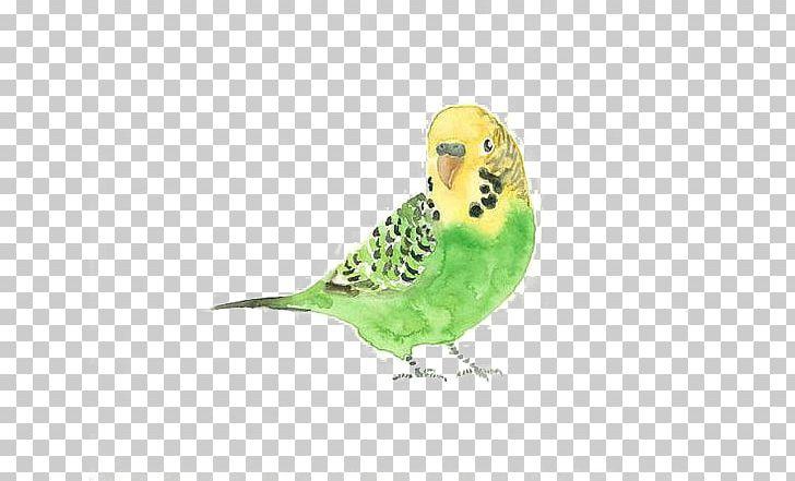 Budgerigar Bird Watercolor Painting Drawing PNG, Clipart, Animals, Art, Beak, Birds, Blue Budgerigar Mutation Free PNG Download