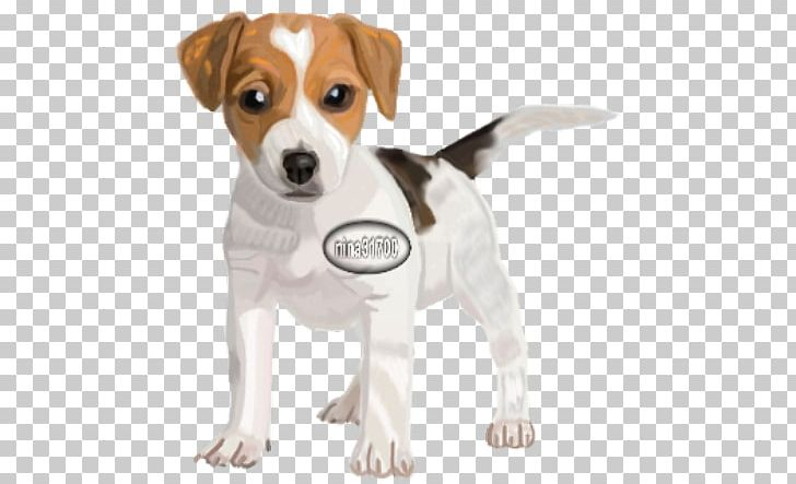 The Parson And Jack Russell Terriers Parson Russell Terrier