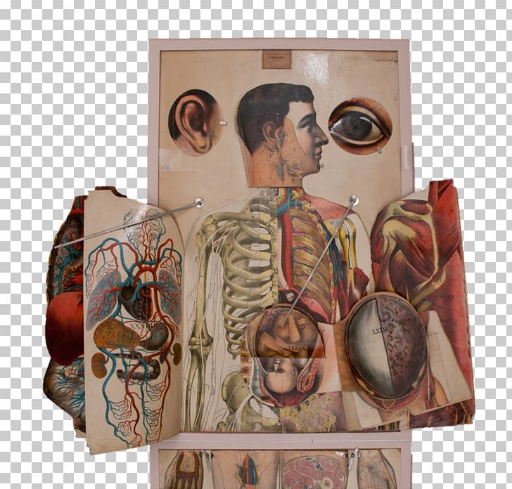 Human Anatomy Anatomical Atlas Human Body Flap PNG, Clipart