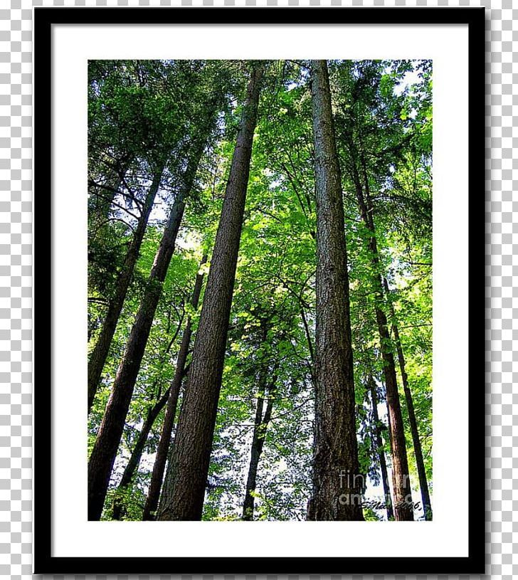 Temperate Broadleaf And Mixed Forest Northern Hardwood Forest Woodland Vegetation PNG, Clipart, Biome, Branch, Broadleaved Tree, Conifers, Deciduous Free PNG Download