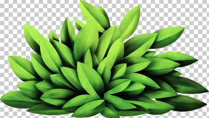 Plant PNG, Clipart, Artificial Grass, Cartoon Grass, Clip Art, Creative Grass, Download Free PNG Download