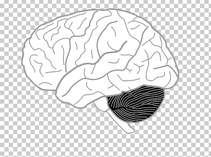 Drawing On The Right Side Of The Brain Coloring Book Human ...