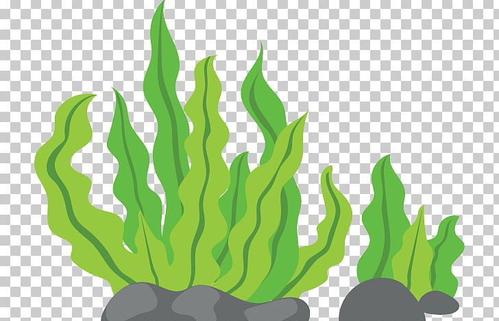 Seaweed Macrocystis Pyrifera PNG, Clipart, Algae, Clip, Clip Art, Grass, Grass Family Free PNG Download