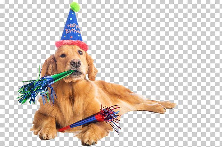 Tremendous Birthday Cake Dalmatian Dog Puppy Party Png Clipart Birthday Funny Birthday Cards Online Necthendildamsfinfo