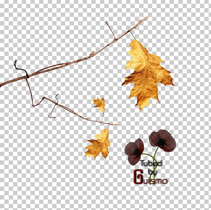 Maple Leaf Plant Stem Woman Flowering Plant PNG, Clipart, Branch, Branching, Et Cetera, Flowering Plant, Leaf Free PNG Download
