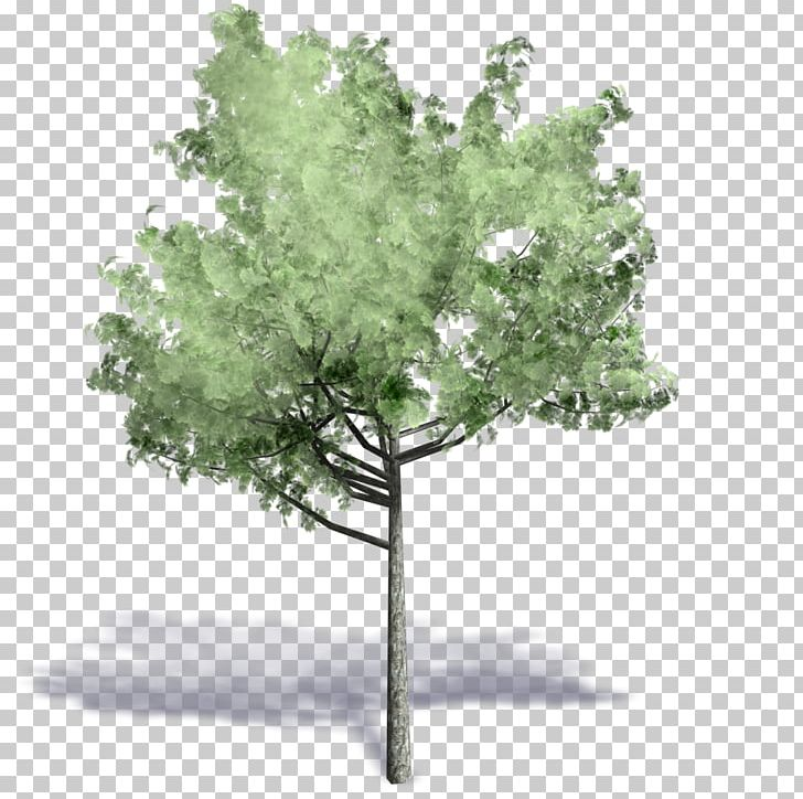 Autodesk Revit Tree ArchiCAD Axonometric Projection  dwg PNG