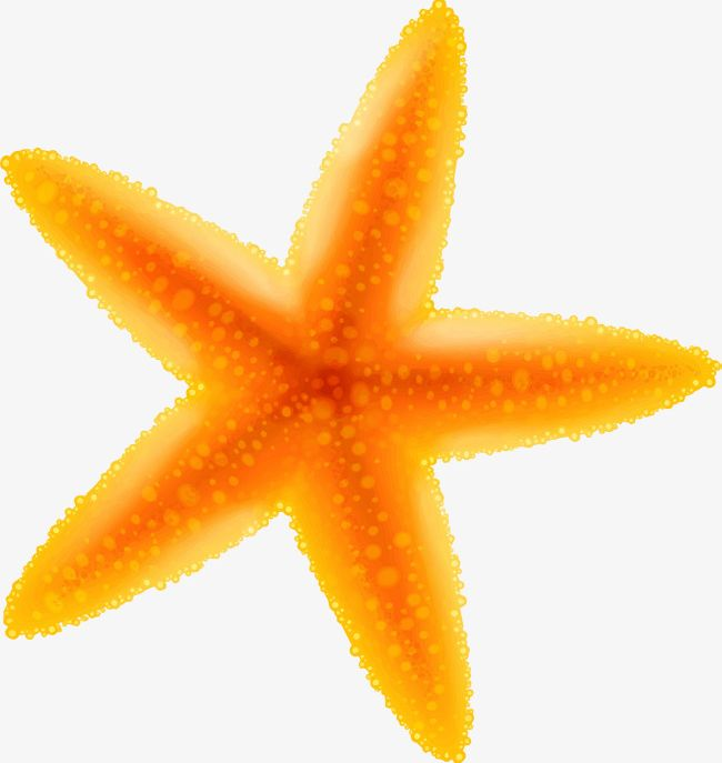 Starfish yellow. Cartoon png clipart