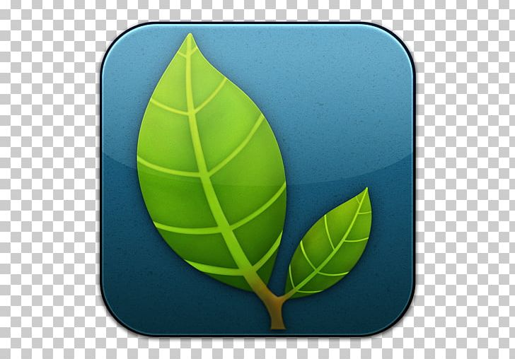 Plant Tennis Ball Leaf Football PNG, Clipart, Apple, Application, Ball, Computer Icons, Dropbox Free PNG Download