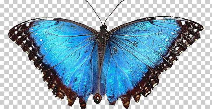 Butterfly Desktop Laptop High Definition Television Png
