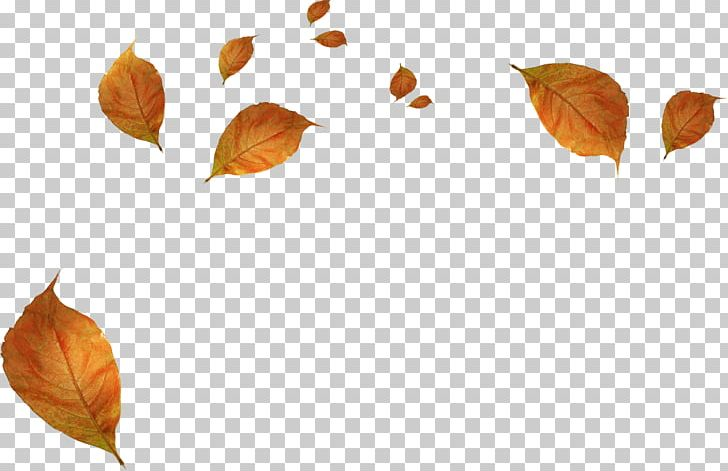 Leaf Autumn PNG, Clipart, Autumn, Autumn Leaf Color, Autumn Leaves, Blade, Cartoon Free PNG Download