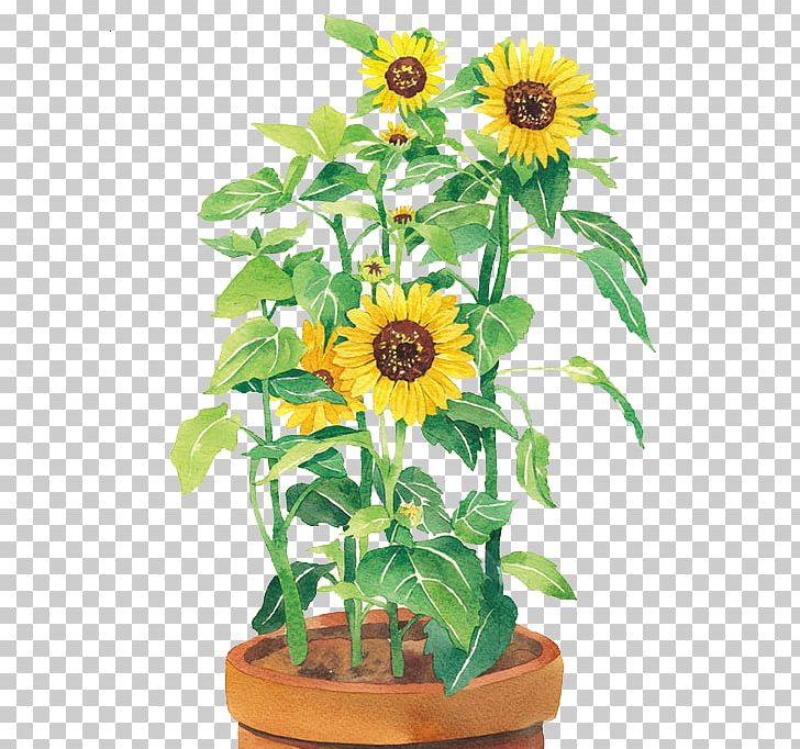 Watercolor Painting Common Sunflower U58a8u7da0 PNG, Clipart, Color, Cut Flowers, Daisy Family, Dark, Decoration Free PNG Download