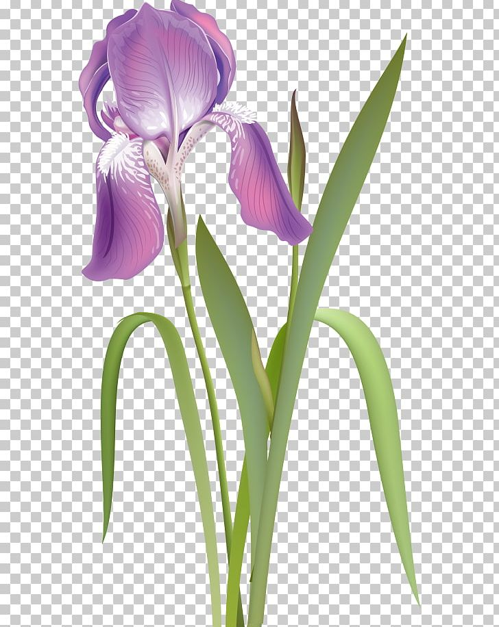 Orris Root Irises Cut Flowers Purple White PNG, Clipart, Blue, Cattleya, Cattleya Orchids, Collection, Color Free PNG Download