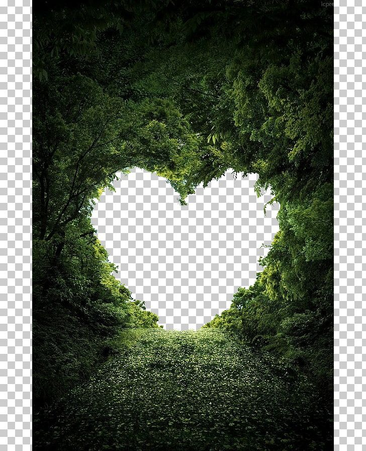 Heart Nature Valentine's Day Love PNG, Clipart, Cloud Tree, Color, Computer Wallpaper, Decorative Patterns, Desktop Wallpaper Free PNG Download