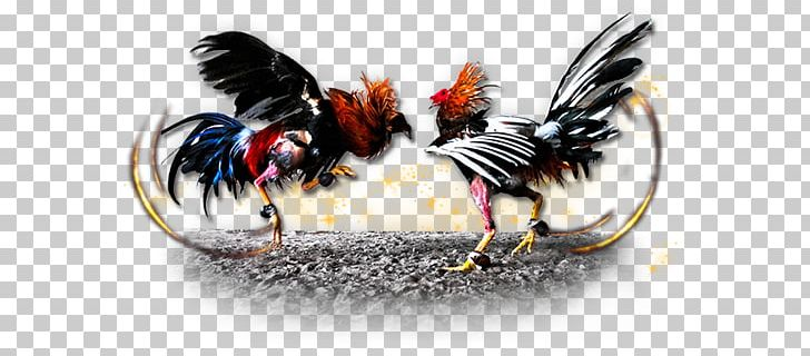 Gamecock Chicken Cockfight Gambling PNG, Clipart, Beak
