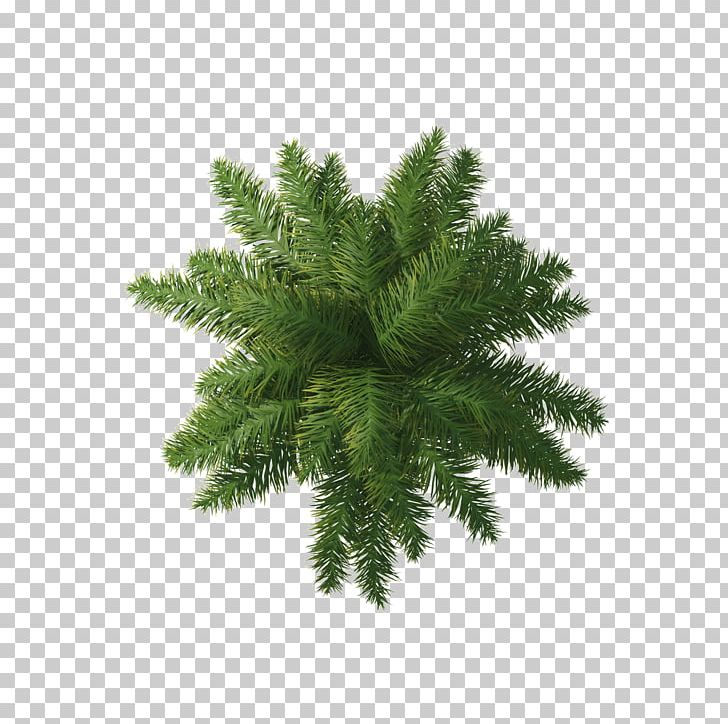 Willow Tree Arecaceae PNG, Clipart, Arecaceae, Autumn Tree, Christmas Tree, Conifer, Download Free PNG Download