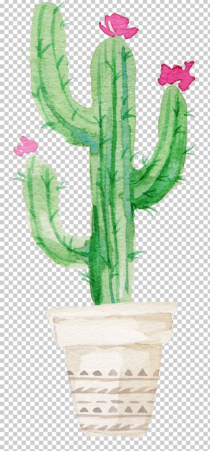 Cactaceae Succulent Plant Watercolor Painting Printmaking Png Clipart Aesthetic Aesthetic Flower Art Beautiful Cactus Free Png