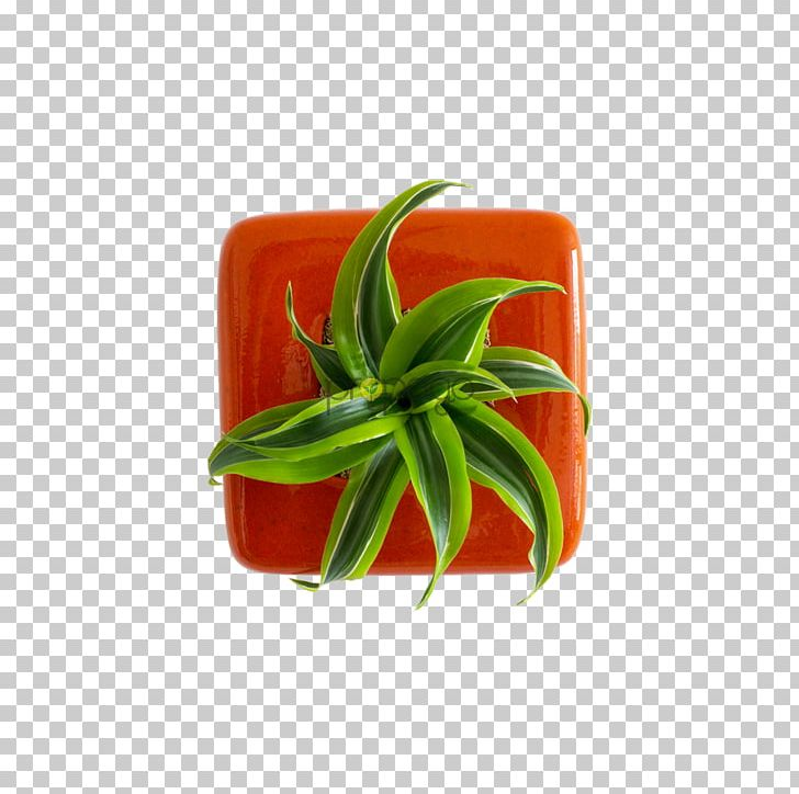 Bell Pepper Vegetable Chili Pepper Fruit PNG, Clipart, Bell Pepper, Bell Peppers And Chili Peppers, Capsicum Annuum, Chili Pepper, Flowerpot Free PNG Download