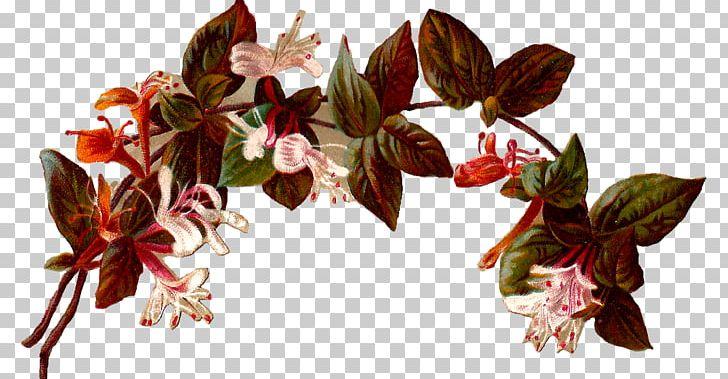 Flower Vintage Clothing Floral Design PNG, Clipart, Arch, Branch, Clip Art, Cut Flowers, Digital Illustration Free PNG Download
