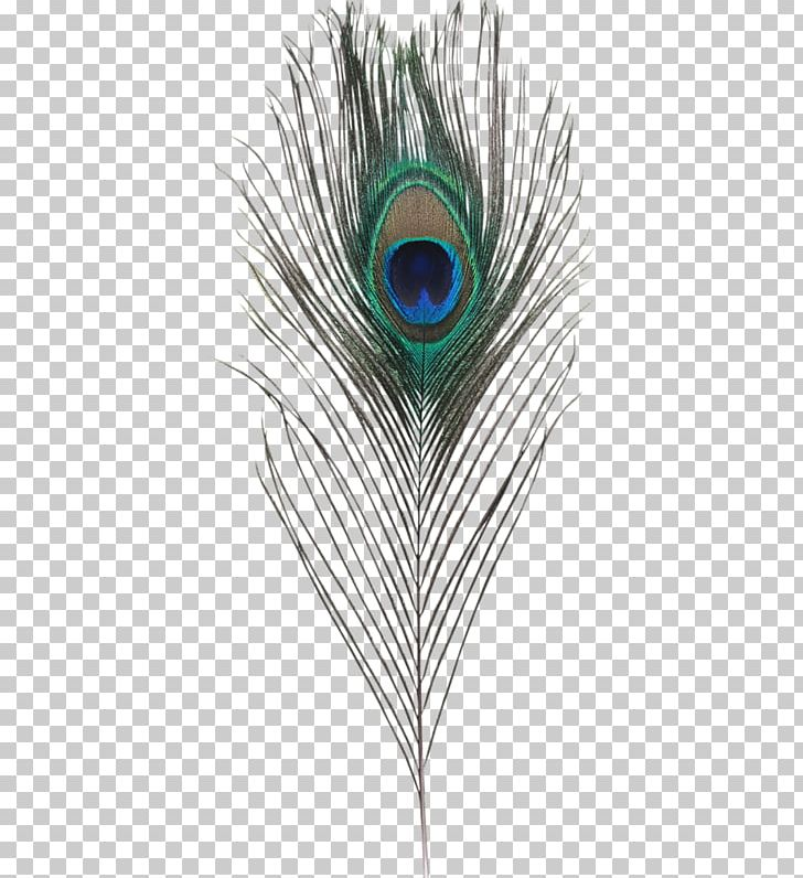 Feather PNG, Clipart, Animals, Beautiful, Clip Art, Closeup, Decoration Free PNG Download