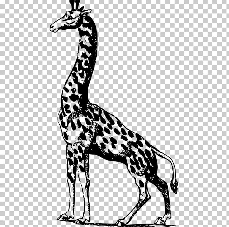 Giraffe Scalable Graphics Illustration PNG, Clipart, Animal, Animals, Black, Black And White, Books Free PNG Download