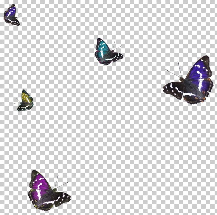 Butterfly 1080p High Definition Television Png Clipart