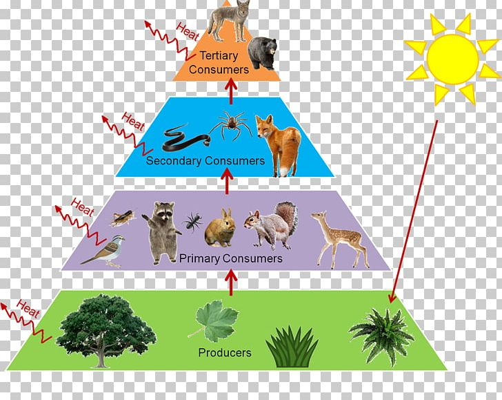 Trophic Level Food Web Food Chain Ecological Pyramid Ecology PNG, Clipart, Angle, Area, Biome, Clipart, Consumer Free PNG Download