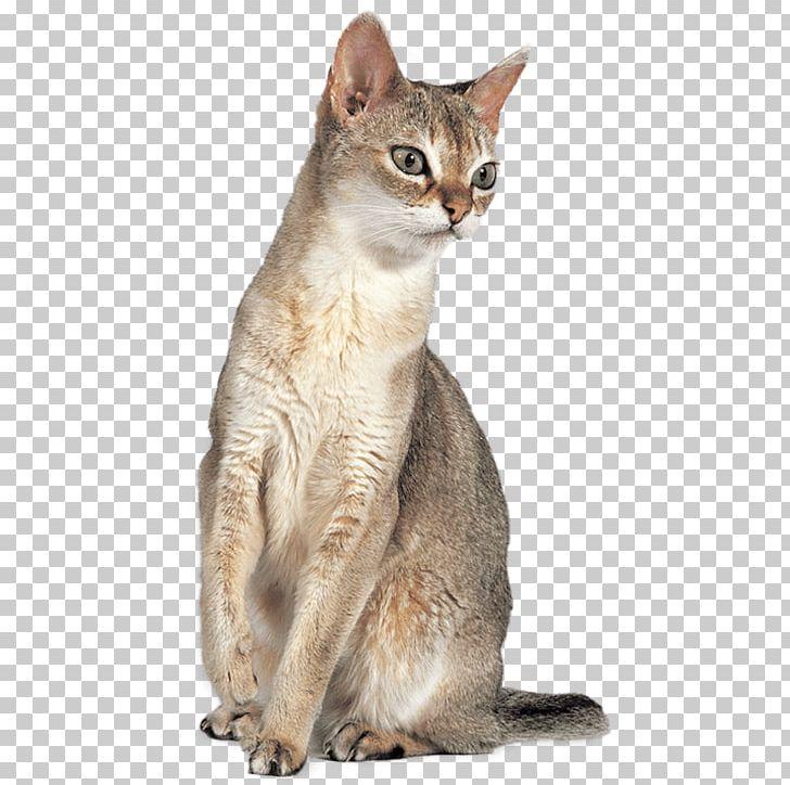 Singapura Cat Abyssinian Cat Javanese Cat Chausie Australian