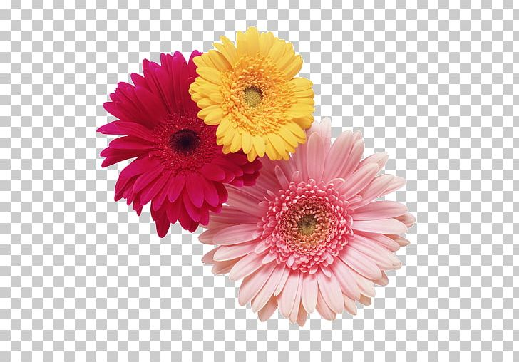 Cut Flowers Chrysanthemum Stock Photography Daisy Family PNG, Clipart, Annual Plant, Aster, Asterales, Chrysanths, Common Sunflower Free PNG Download
