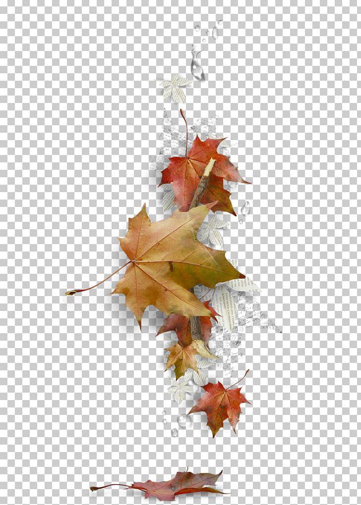 Maple Leaf Borders And Frames Autumn Leaf Color PNG, Clipart, Autumn, Autumn Leaf Color, Borders And Frames, Branch, Computer Free PNG Download