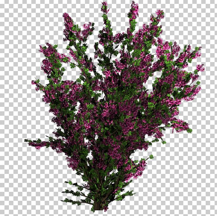 Flower Plant Tree Shrub Texture Mapping PNG, Clipart, Bougainvillea, Branch, Bushes, Cut Flowers, Flower Free PNG Download