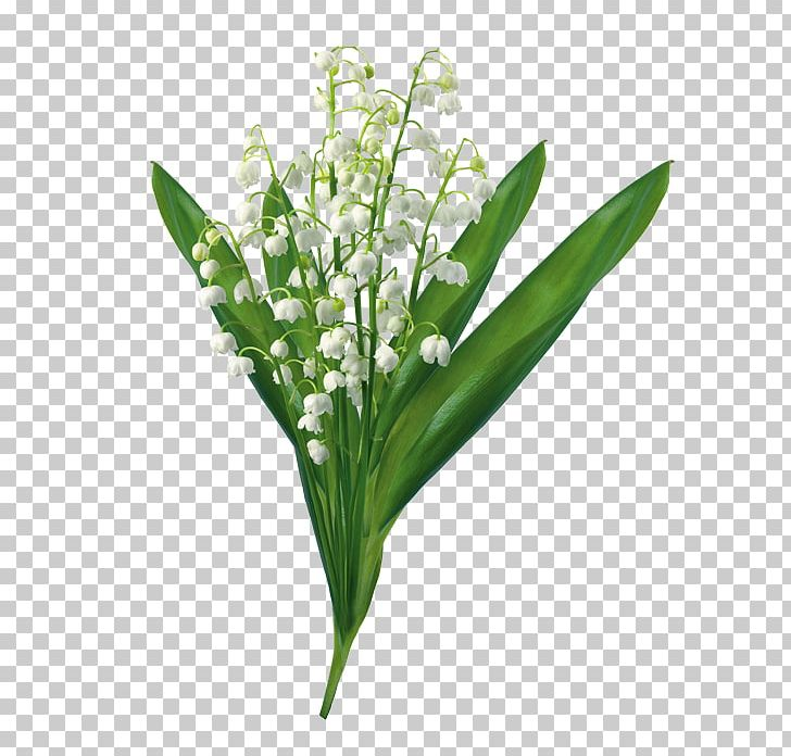 Lily Of The Valley PNG, Clipart, Arumlily, Calla Lily, Cut Flowers, Drawing, Flower Free PNG Download